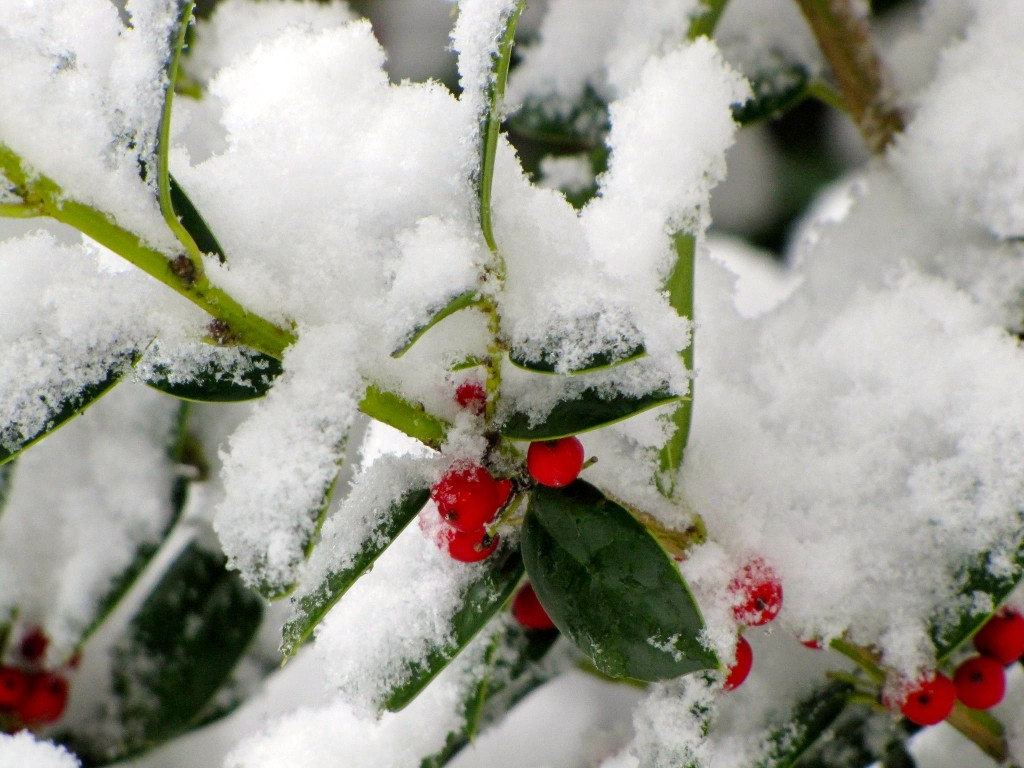 'Tis the Season, to showcase the givers. Winter at Linda's place.